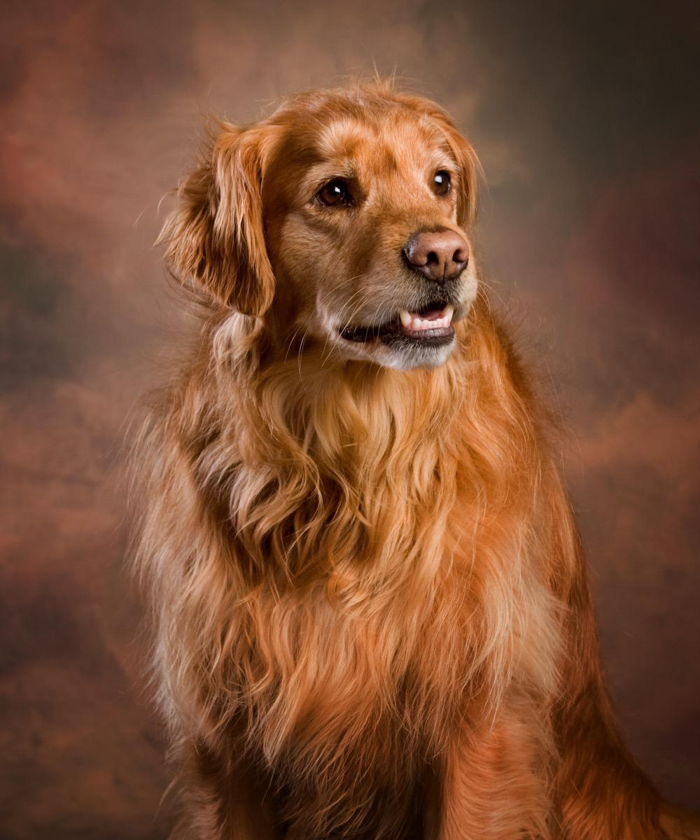 Beasley - Pet Photography by Kevin Eilbeck