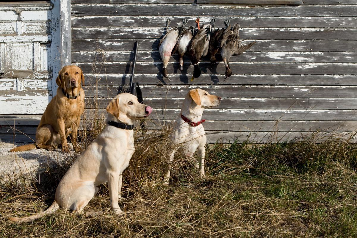 Duck Hunters - Pet Photography in Rapid City, SD by Kevin Eilbeck